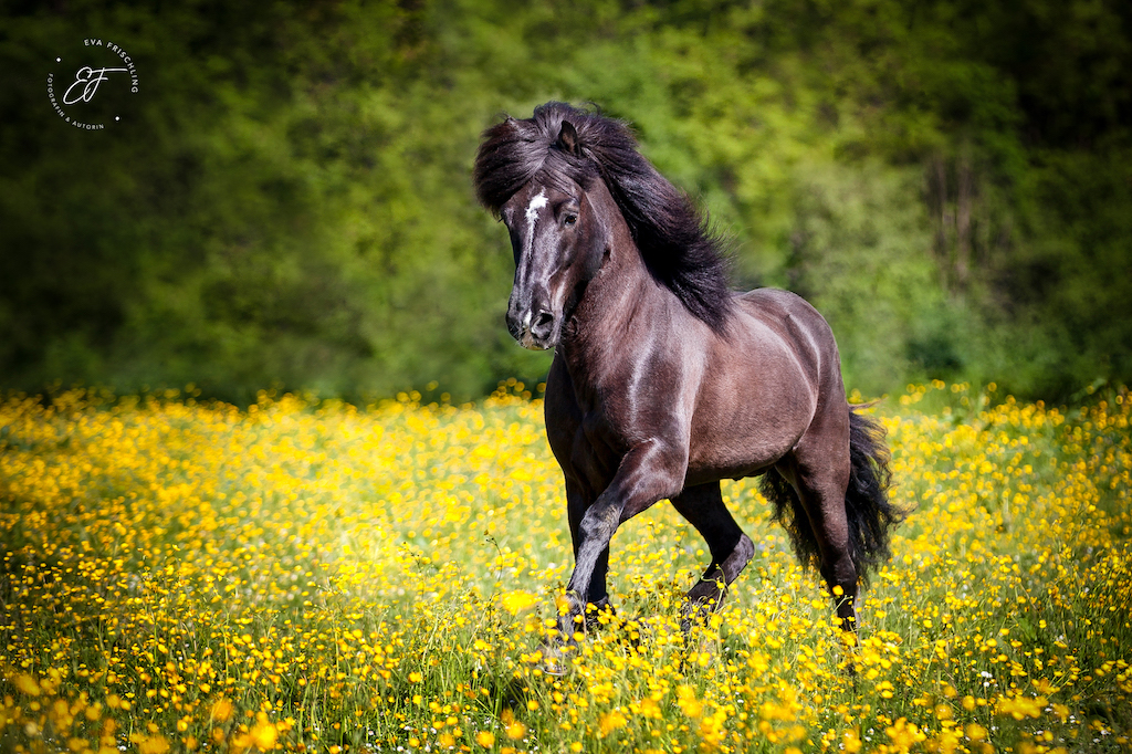 Burghauser Verkaufspferde